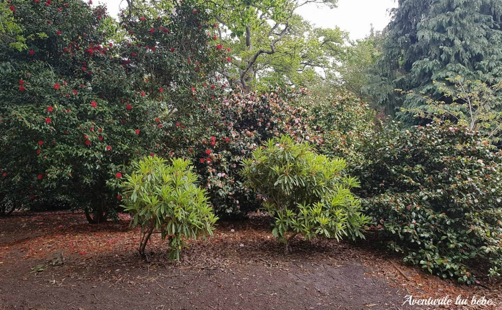 parcul roial Windsor Great Park